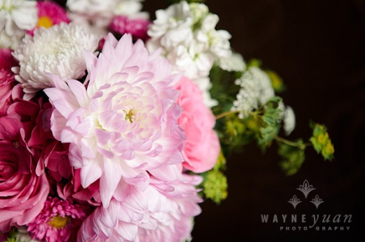 Blush Pink Dahlia